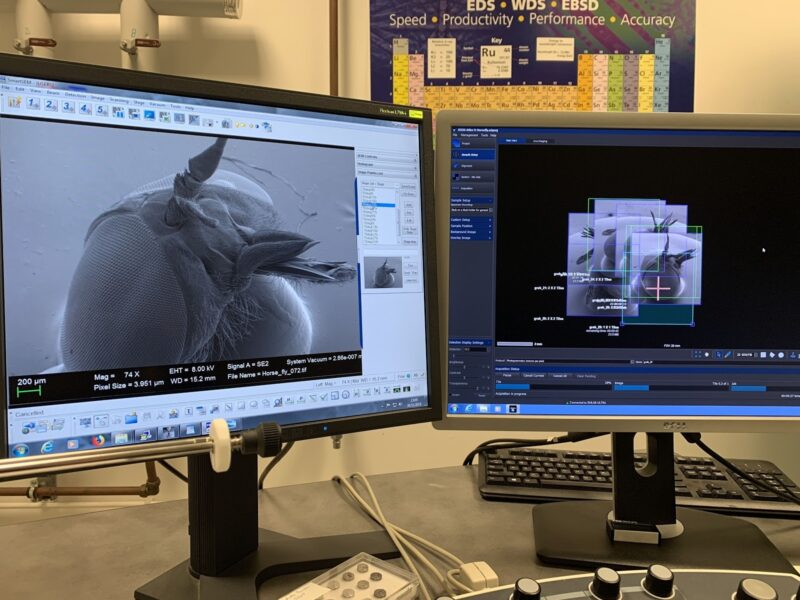 Capturing images of a blowfly head inside of a scanning electron microscope.